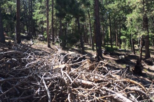 Slash Piles